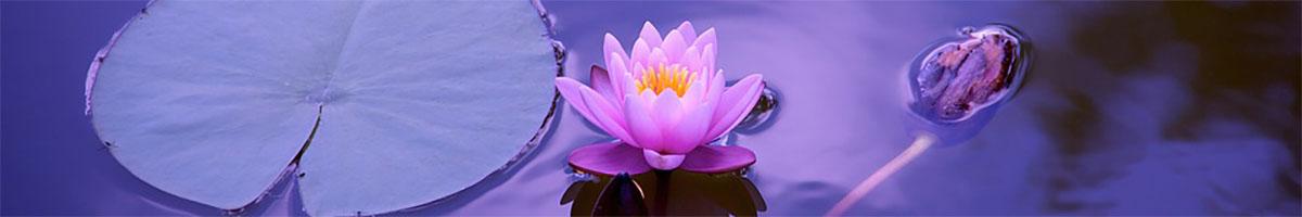 healingceremonies2